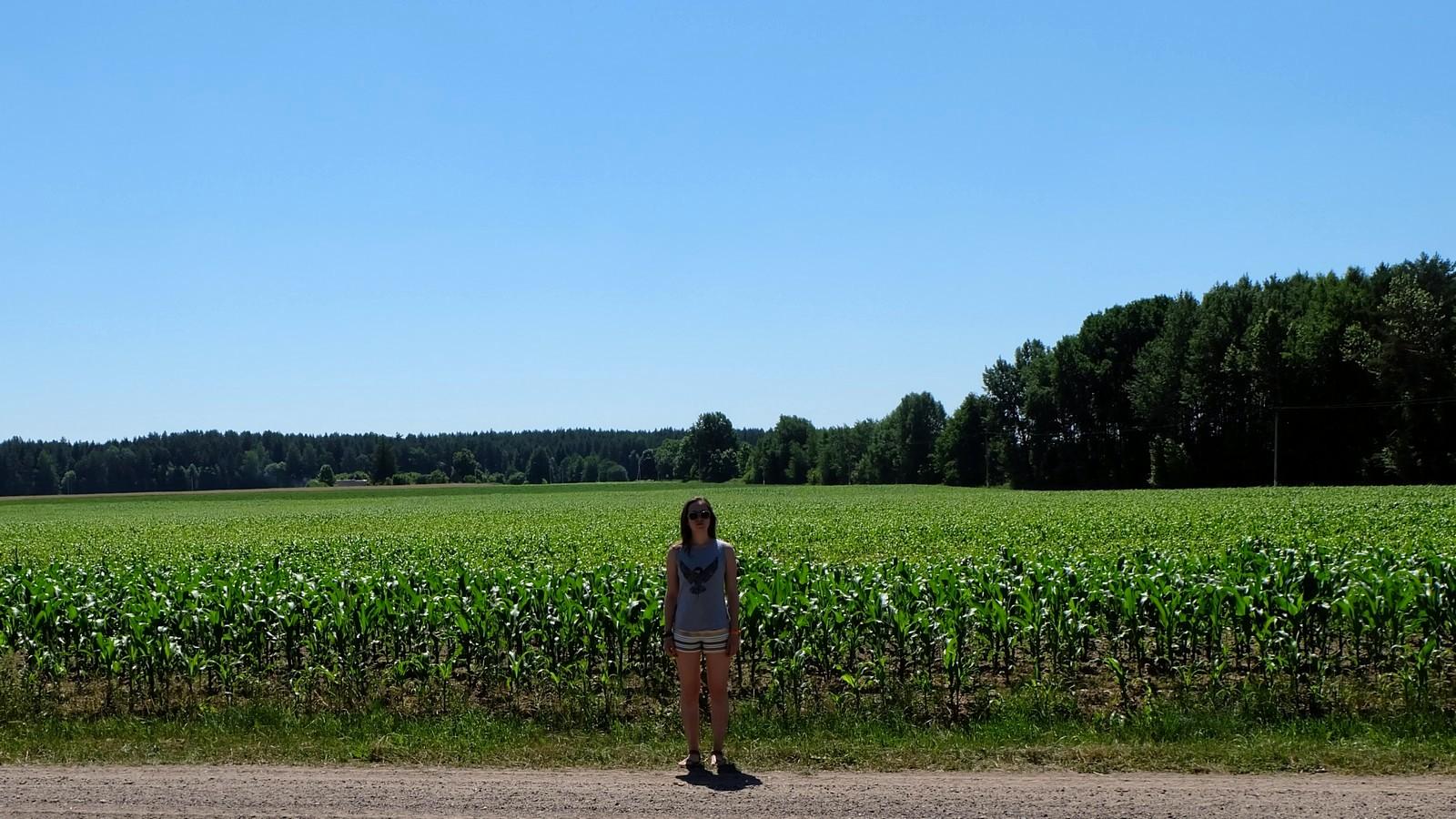 Кукуруза — царица полей, Беларусь