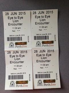 Eye to Eye Lion at Perth Zoo