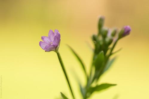 Weeds // 29 06 15