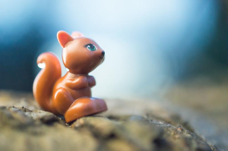 Squirrel! (13:365:2017)