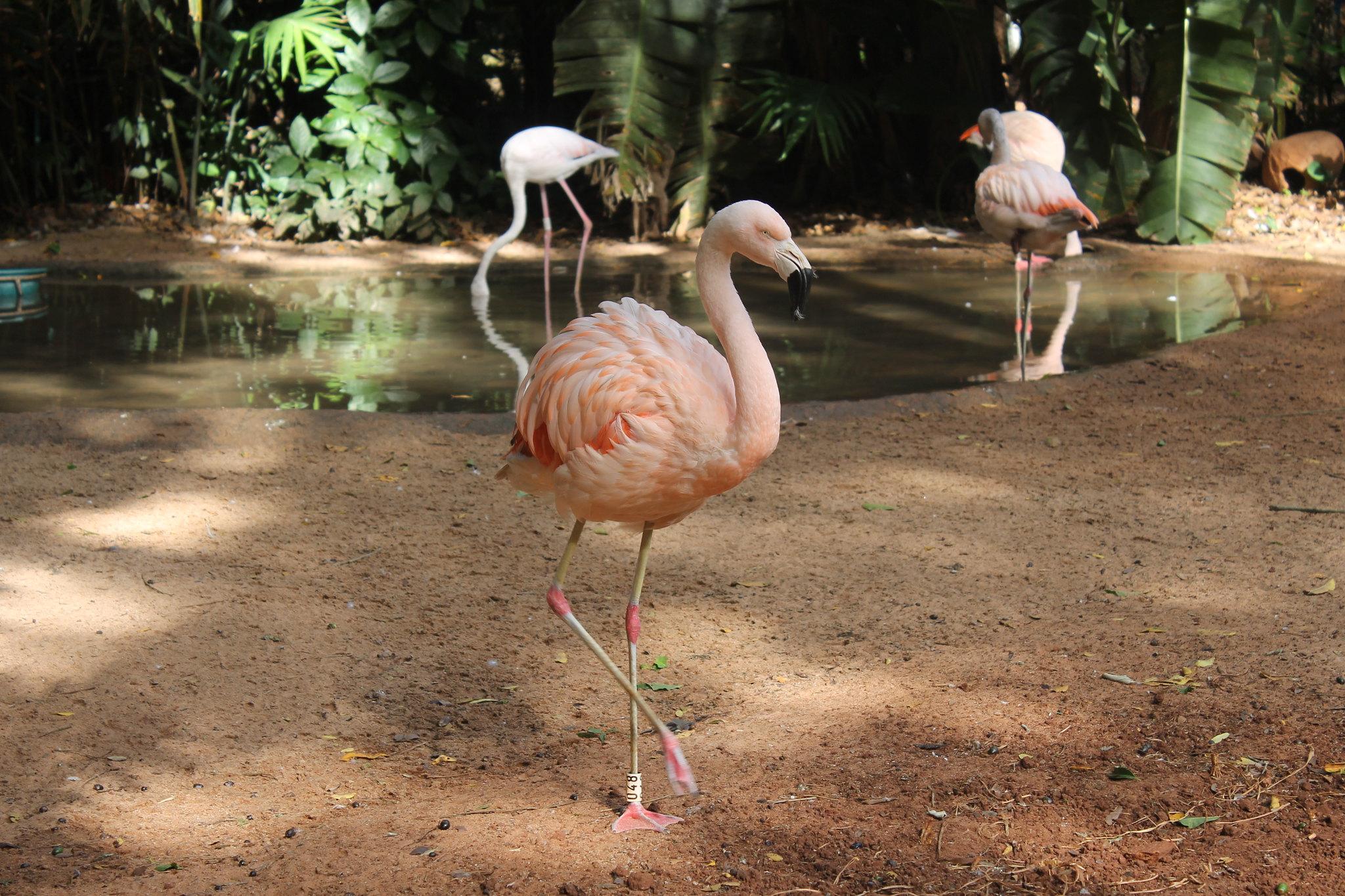 parque-das-aves6