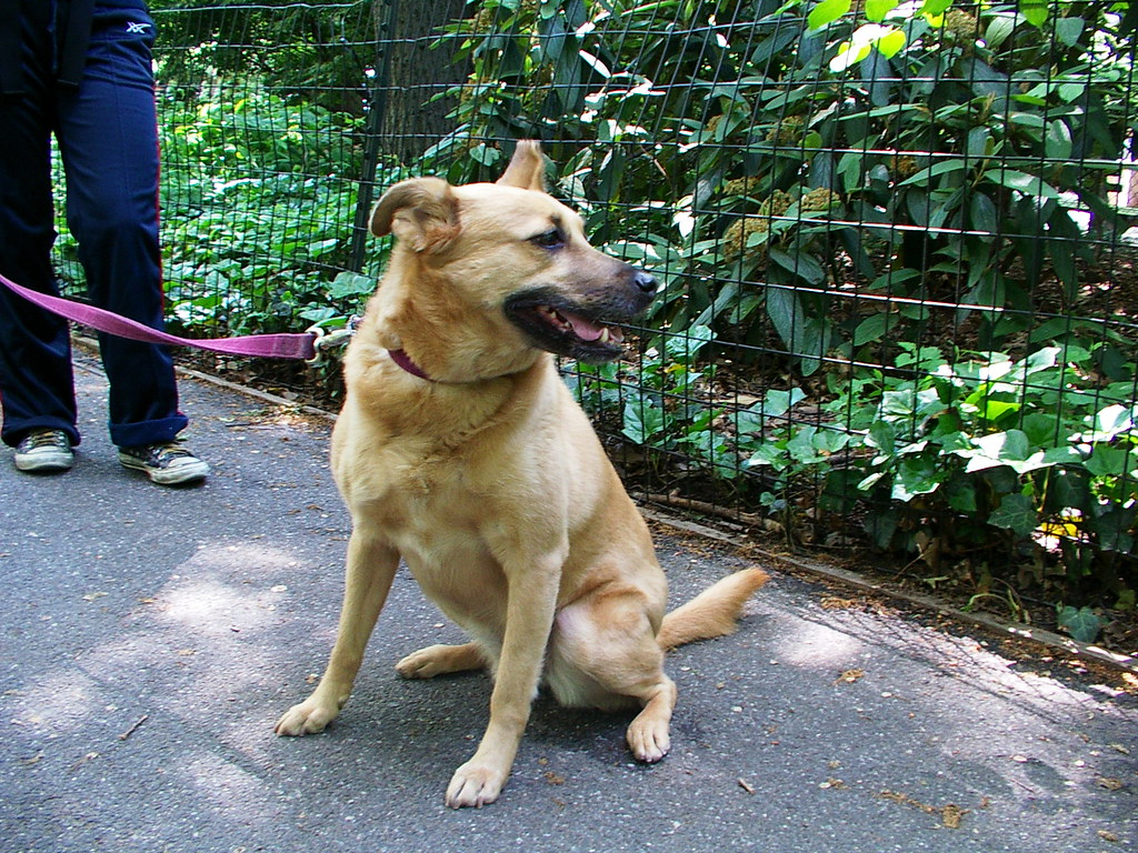 Image Result For Affectionate Dogs That