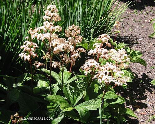 Nz garden design perennial plants nz landscaping ideas for Landscape design jobs new zealand
