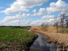 Polder | by ♥ Annieta  home and catching up