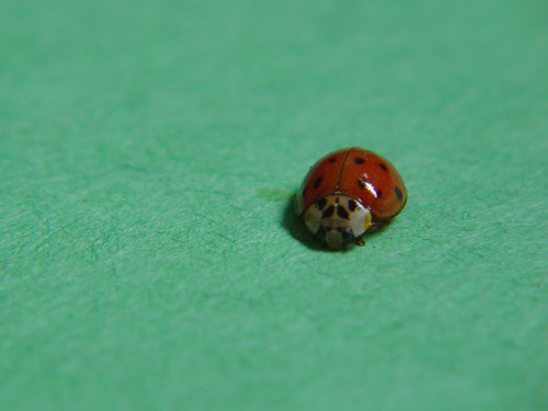 Lady bug | by Bernie H.