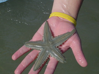 Estrela do Mar (sea star) | by Henrique Vicente
