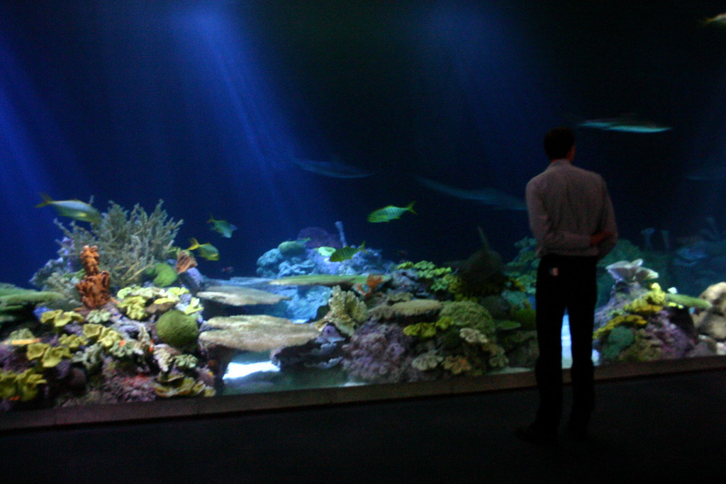 The Shark Tank Shedd Aquarium Chicago Il Adam S Flickr