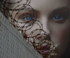 Beauty and the barbed wire | by colorstalker
