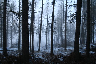Cold Eerie Forest | by Superali007