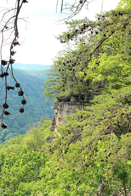 20150530_New_River_Gorge_054