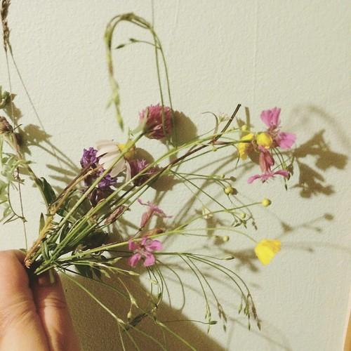 Sju blommor