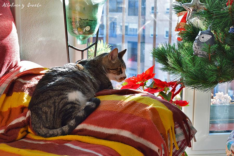 Navidad - Christmas
