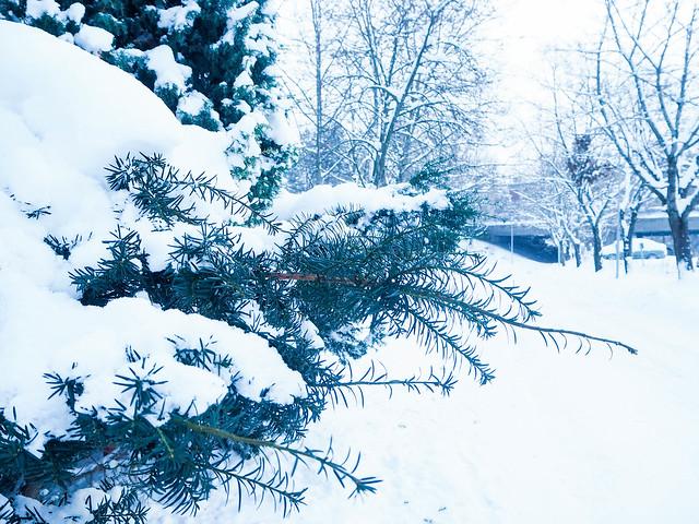 P1040682.jpgSNowyChristmasTree,P1040679.jpgWinterSNowyViewHelsinkiFInlandWindow, winter, talvi, helsinki, suomi, finland, luonto, nature, aamusta iltaa, dawn to dusk, tammikuu, january, sää, weather, näkymä, view, landscape, maisema, kattojen ylle, rooftops, christmas tree, joulukuusi,