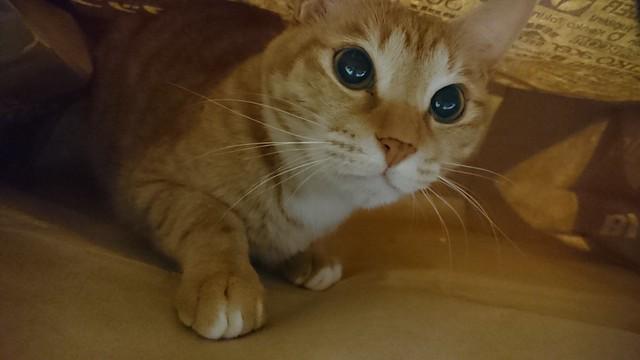 猫同士、仲良く袋に入れば良いのに