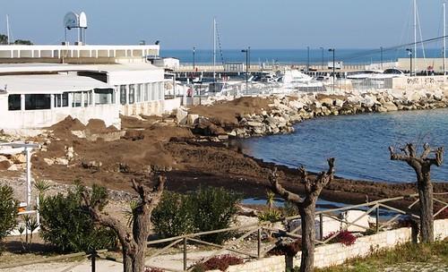 La posidonia che nella primavera scorsa ha invaso Cozze Nere polignano spiaggia