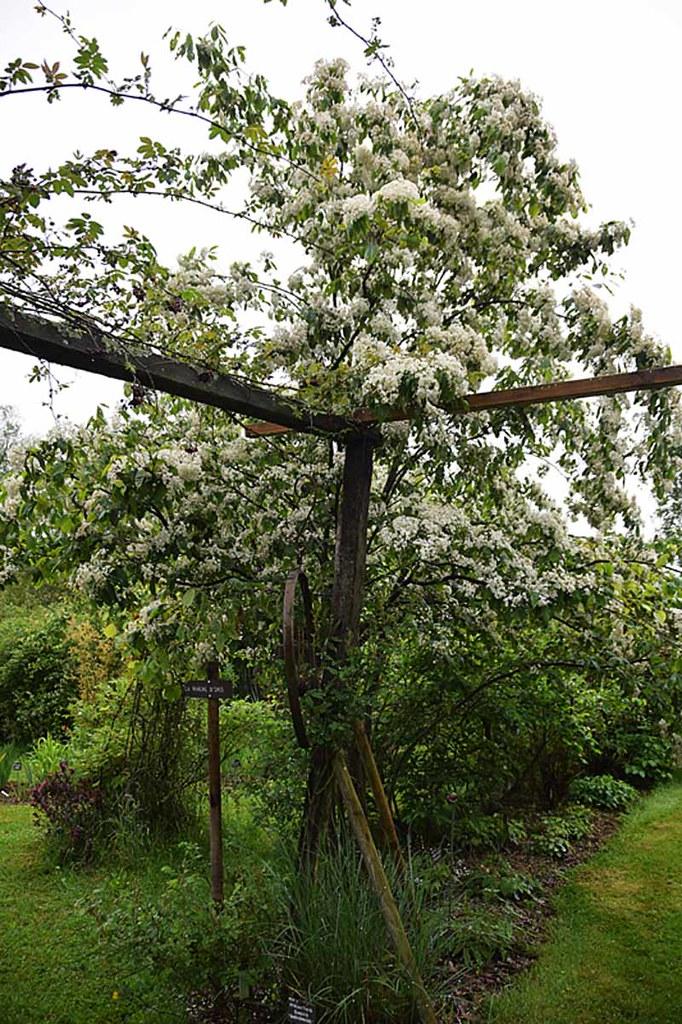 Pepiniere Des Avettes : photinia beauverdiana c dric basset p pini re des ~ Dode.kayakingforconservation.com Idées de Décoration