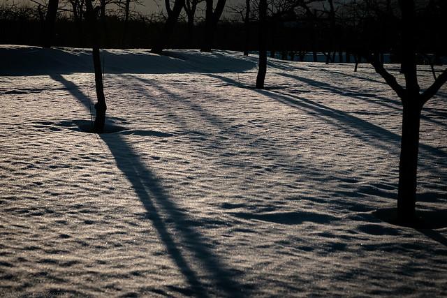 Snow Shade