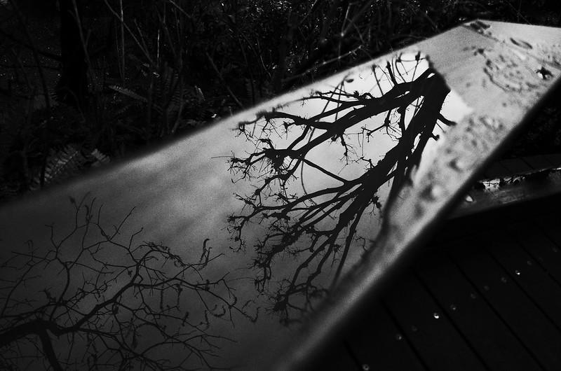 枯枝の密談