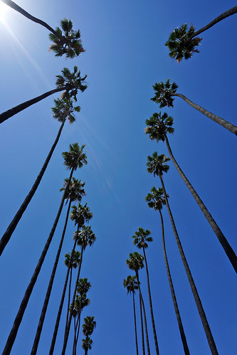 Longstreet Palms | by CalUrbanist