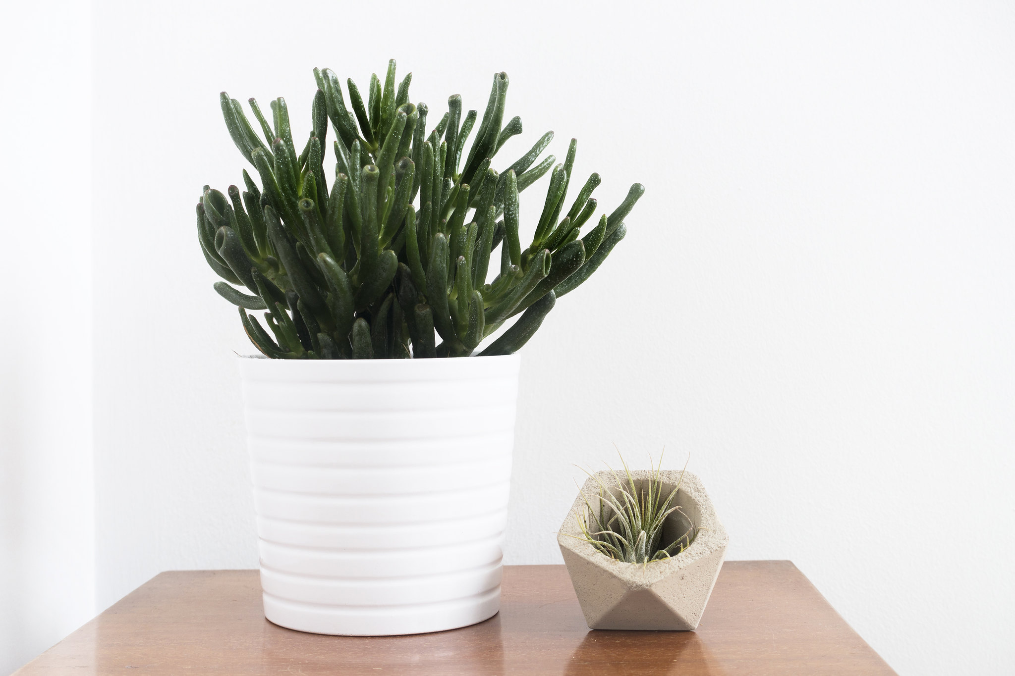 Easy To Keep House Plants
