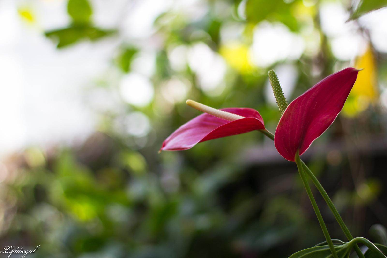 yale botanical garden-3.jpg