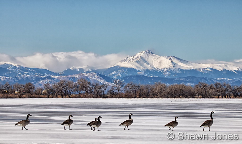 Geese walk across a frozen Barr Lake with the snow-capped Rocky Mountains in the background. (Shawn Jones)