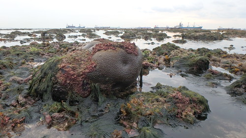 Living reefs of Terumbu Selegie