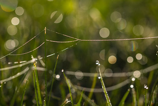 Dew with bokeh | by Infomastern