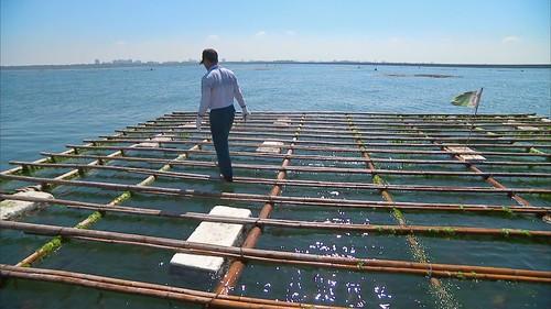 蚵棚利用保麗龍的福利漂浮在海上。圖片來源:我們的島