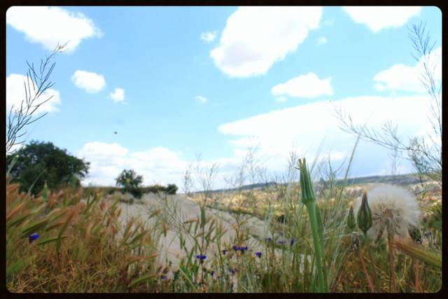 Dandelion, clouds, Goreme