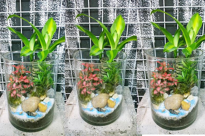 tieucanh24h.com | cay xanh | tieu canh cay xanh