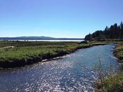 The Dosewallips Floodplain and Estuary Restoration