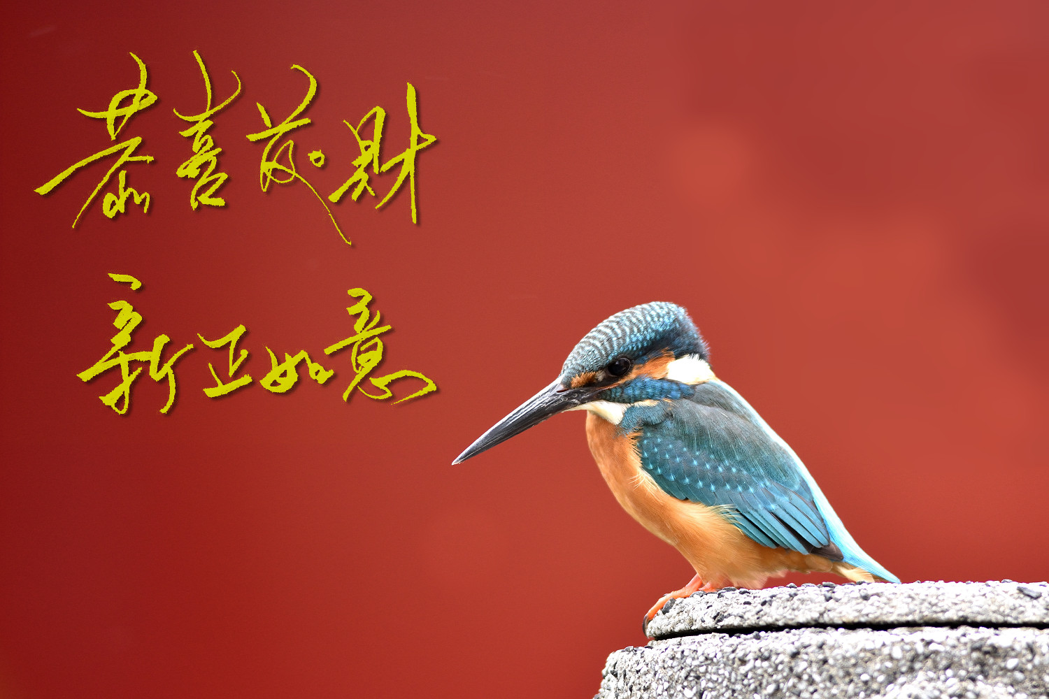 Common_Kingfisher_9202_bless