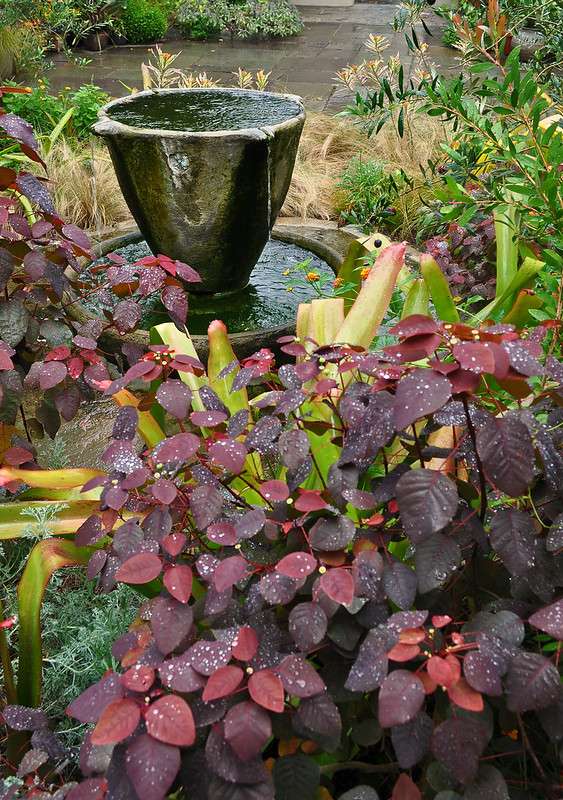 Chanticleer Teacup Garden (3)
