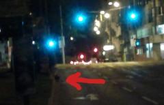 Ein Fuchs bei der Friedensbrücke