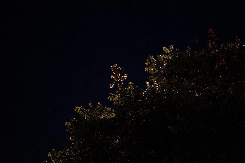 生活隨拍 FUJINON ASPHERICAL LENS -XF 35mm F1.4R