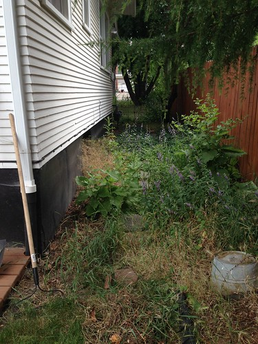 Side yard before...