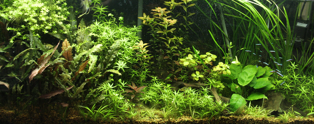 Aquascape My 55 Gallon Planted Aquarium Union Aquarium Flickr