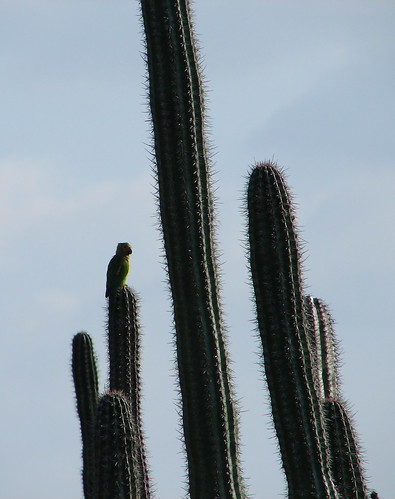 Parrot and Cacti | by Alexander Yates