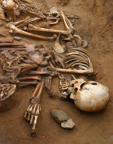 Big Skeleton Little Skeleton Dog Skeleton