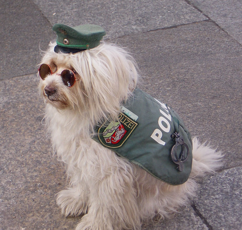 German police dog... Cologne 2004 | by exfordy
