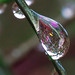 a drop of garden