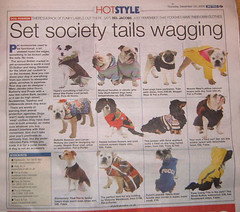Dog Coats For Sale