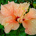 Fridays Flower Power
