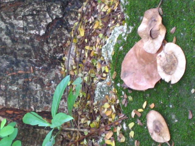 Recent Photos The Commons 20under20 Galleries World Map App Garden ...: www.flickr.com/photos/rikajenzhomekitchen/80138597