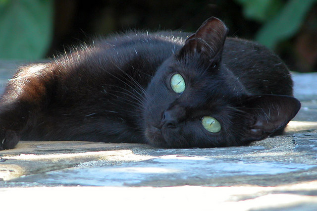 Image result for pictures of black cats with green eyes