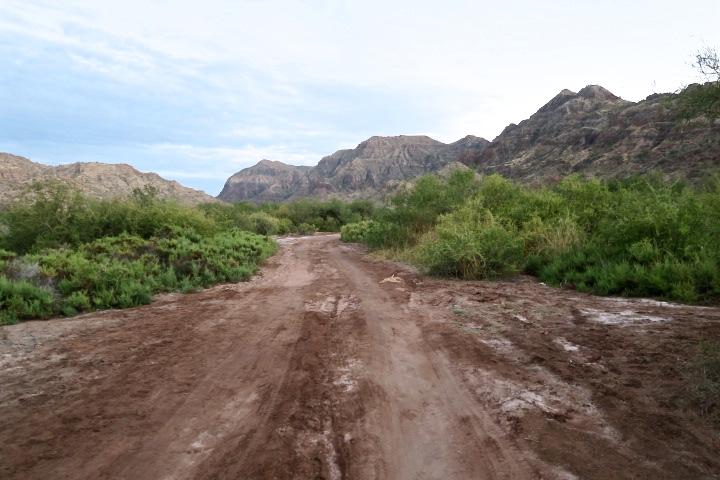 El salnitre s'apodera del sòl d'Agua Verde.