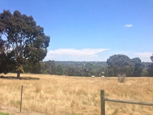 City view from Banyule Flats, Viewbank