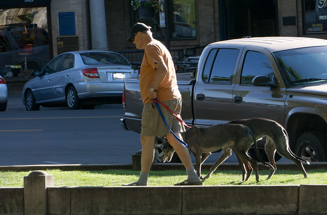 Man Walking Greyhounds
