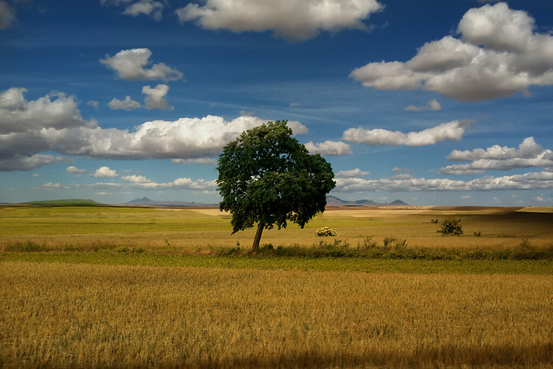 Lonely tree - The best landscape ever
